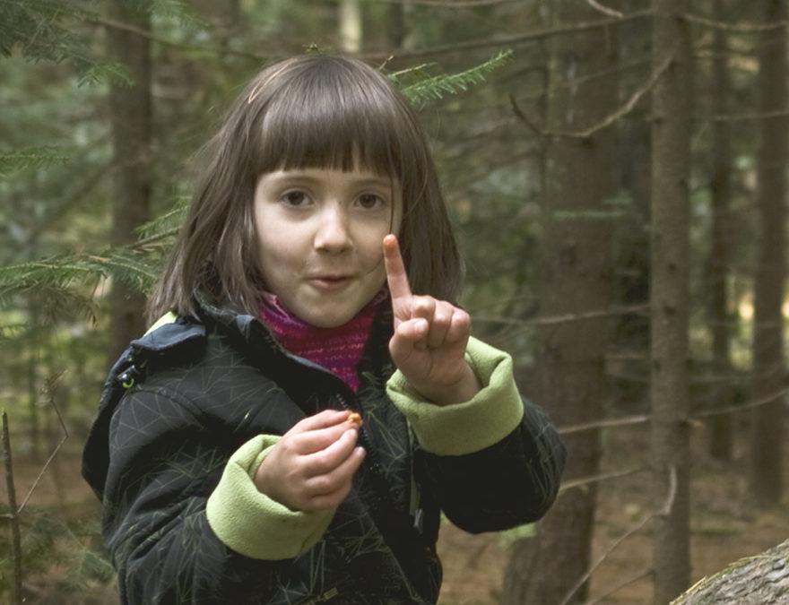 LES CHAMPIGNONS GASTRONOMIQUES ESSENTIELS EN JARDIN FORESTIER