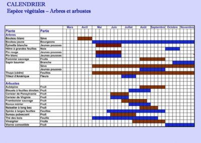 Nous construisons pour vous un calendrier mensuel personnalisé qui vous indique, mois après mois, le moment propice pour la cueillette de vos comestibles sauvages…