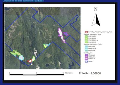Étude de caractérisation: localisation des peuplements pour implantation de sites de cueillettes de champignons sauvages
