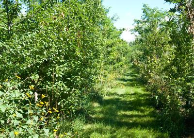 Forêt nourricière: Ferme Miracle's Farm