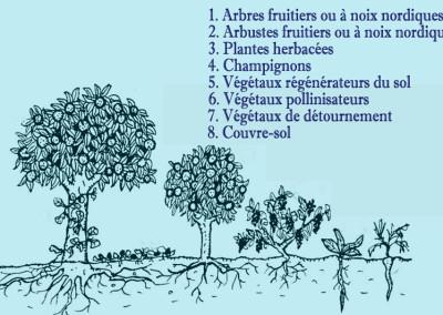 Verger potager forestier et Verger à noix nordiques en cultures multistrates