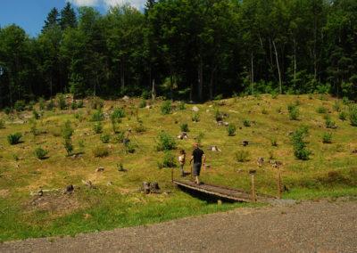 Verger potager forestier: 2 ans après l'implantation.