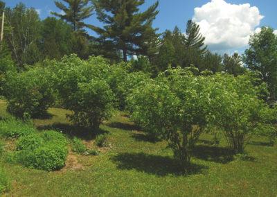 Verger potager forestier: 3 ans après l'implantation.